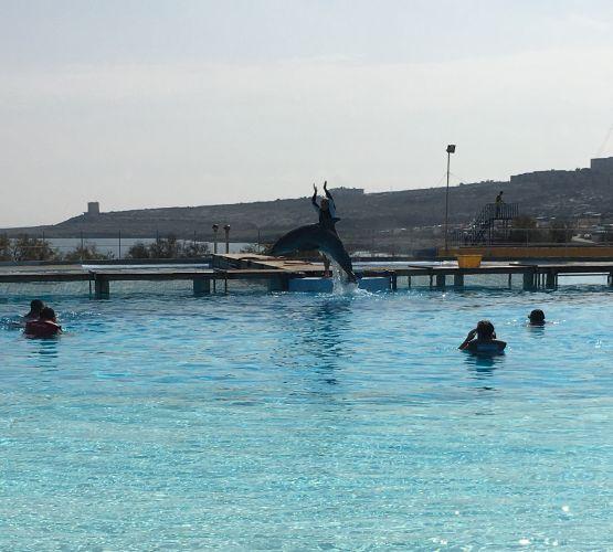 Nadando con delfines
