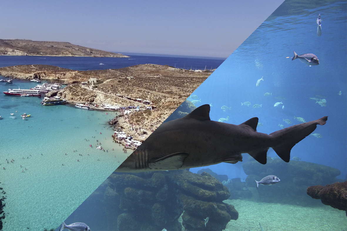 Underwater Safari & Comino Cruise